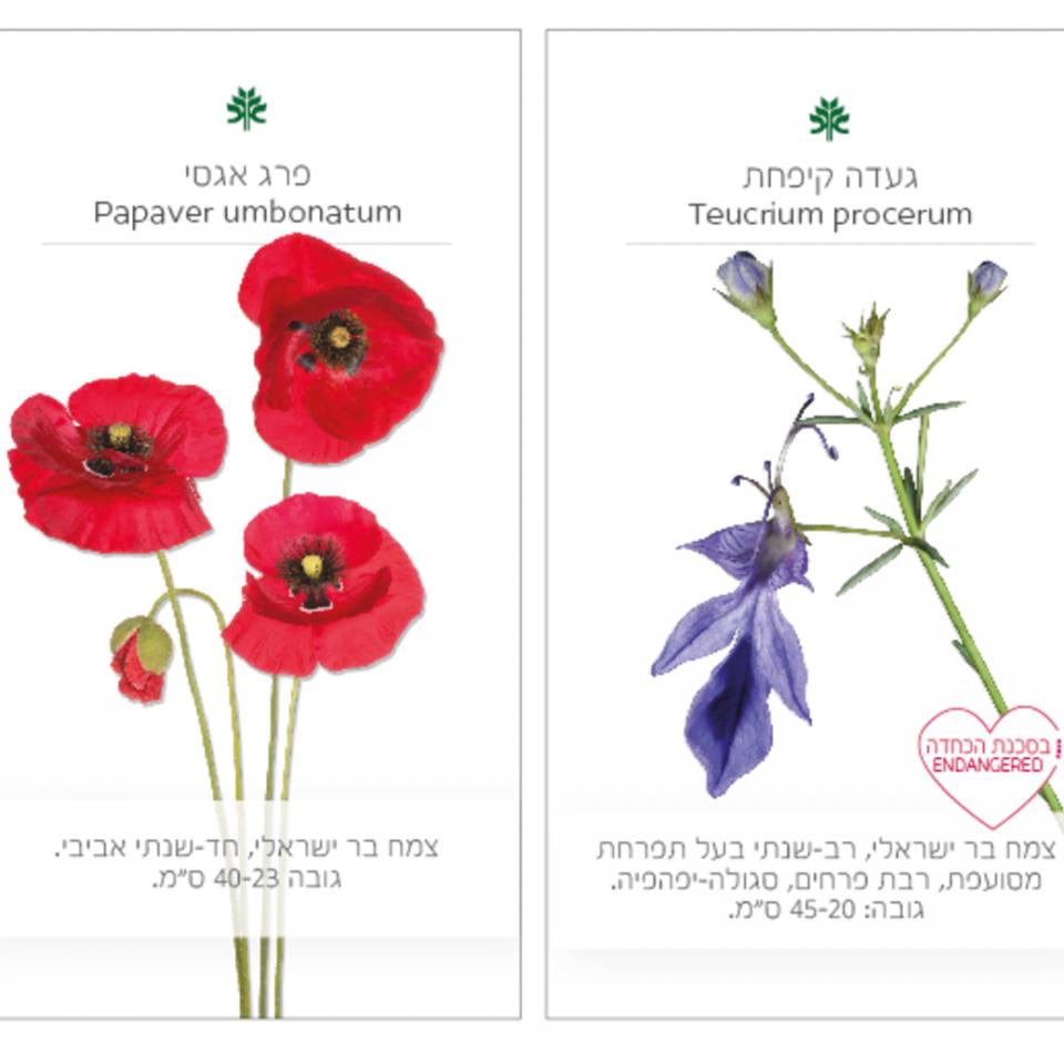 זרעי הגן 1 (1)