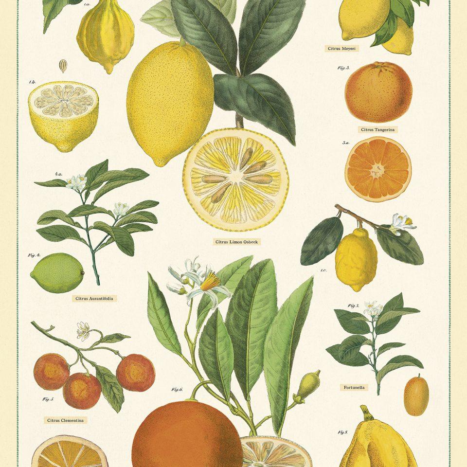 wrap_citrus